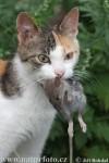 gatto e topo.jpg