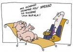 bufala porco.jpg